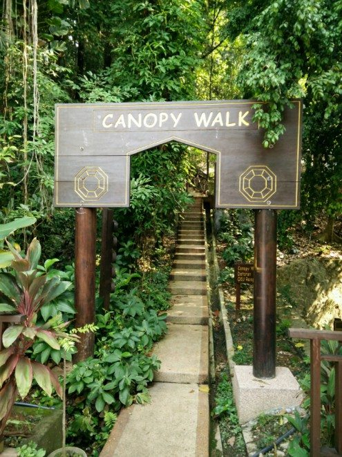 ... canopy walk kl forest eco park & Canopy Walk at KL Forest Eco Park (Bukit Nanas Forest Reserve ...