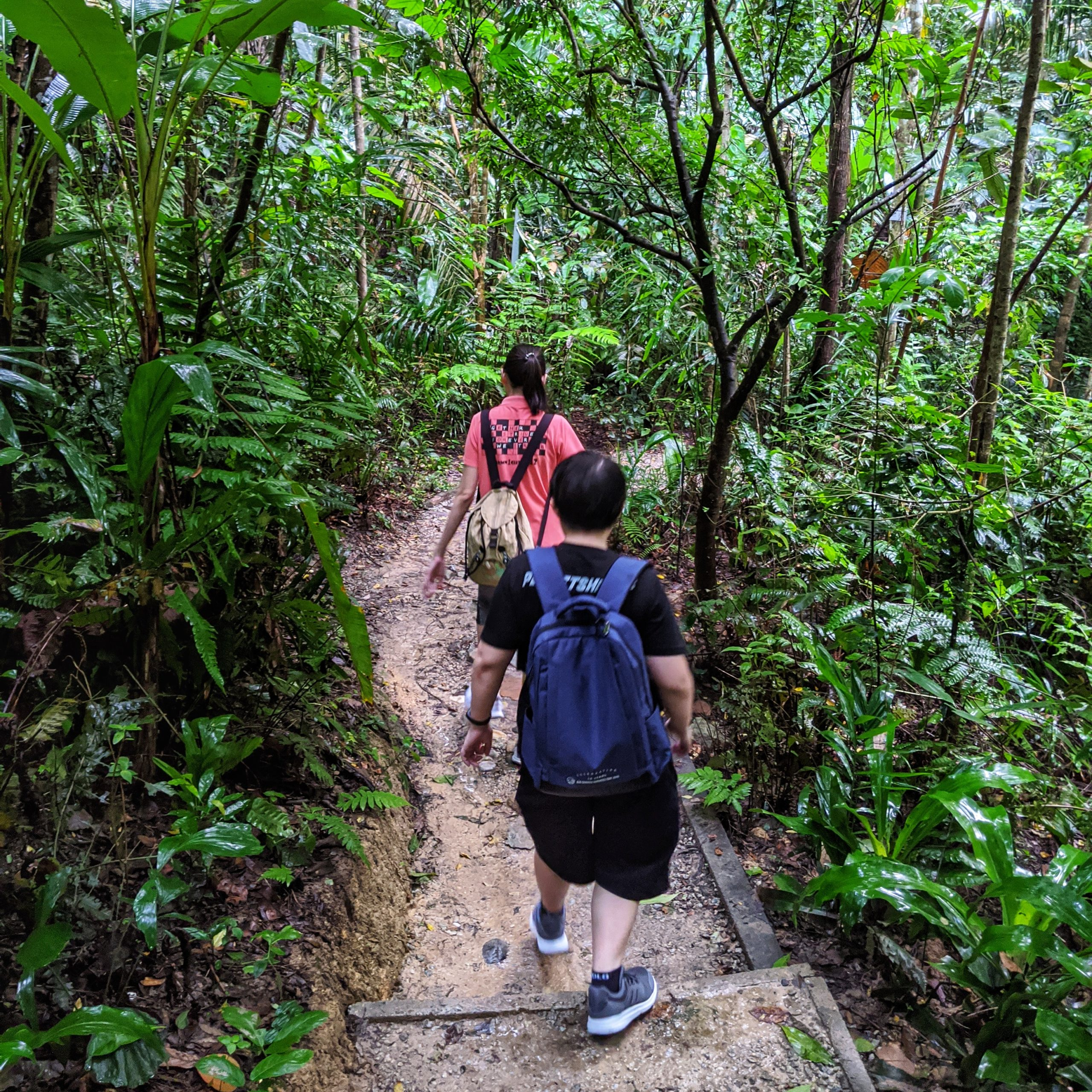 Hiking at Taman Tugu During RMCO June 2020